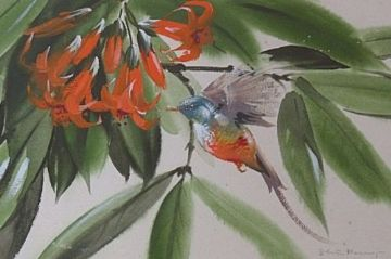 Edwin Penny Original Watercolour Painting Of A Hummingbird